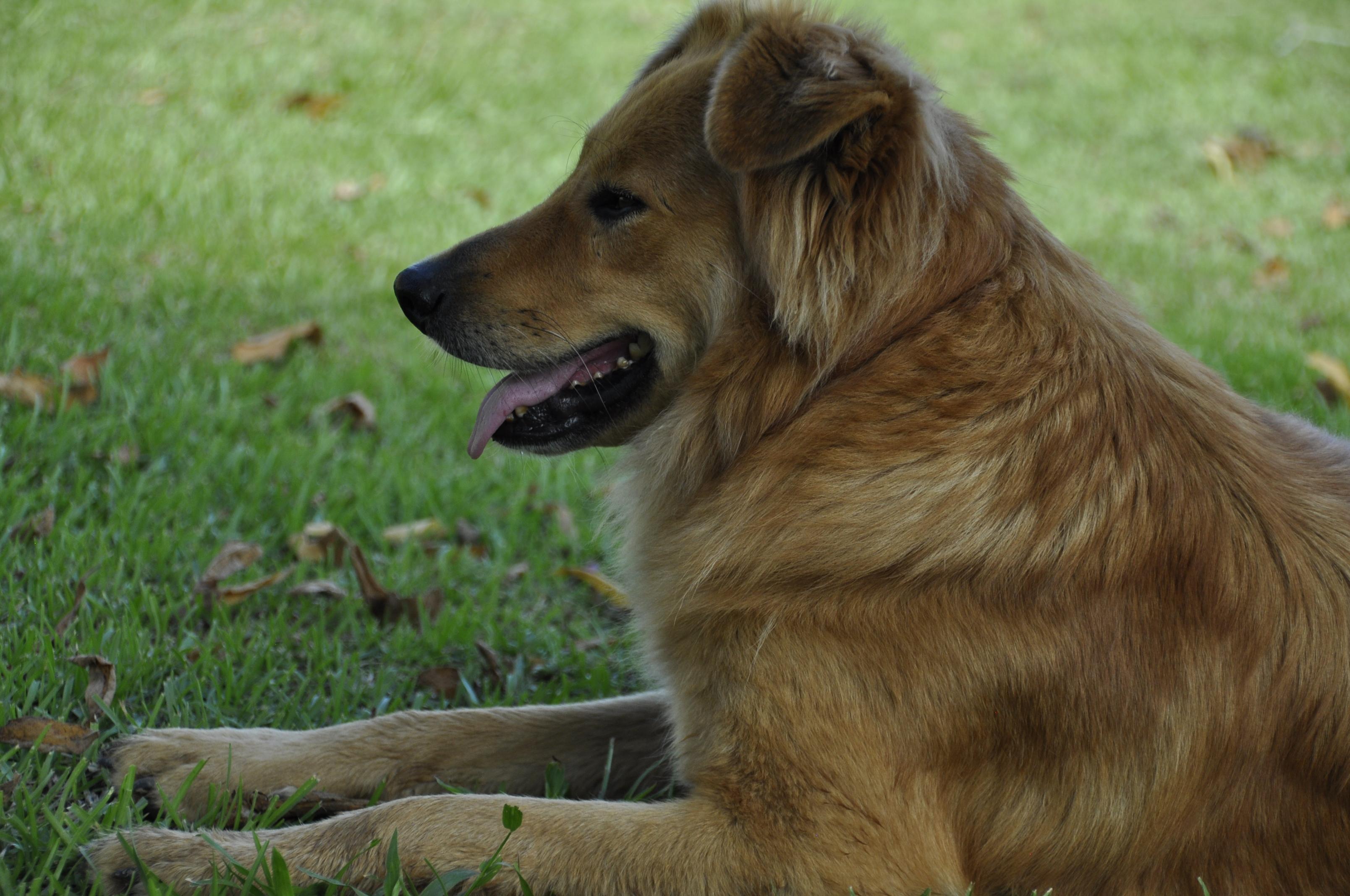 San Buenas dog